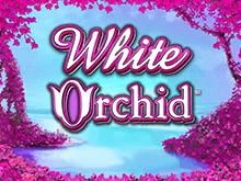 Белая Орхидея — игровой аппарат онлайн